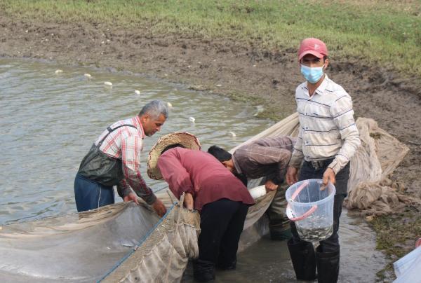 ازآغاز رها سازی بیش از70 میلیون قطعه بچه ماهی تکثیری به دریا